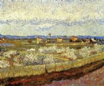 vincent van gogh la crau with peach trees in bloom painting