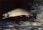 winslow homer a brook trout painting