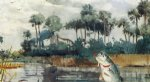 black bass florida by winslow homer painting