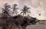 coconut palms by winslow homer painting