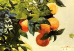 oranges on a branch by winslow homer painting