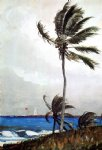palm tree nassau by winslow homer painting